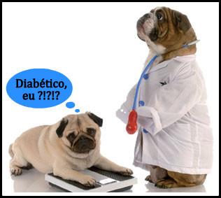 Seu bichinho de estimação também pode ter diabetes!